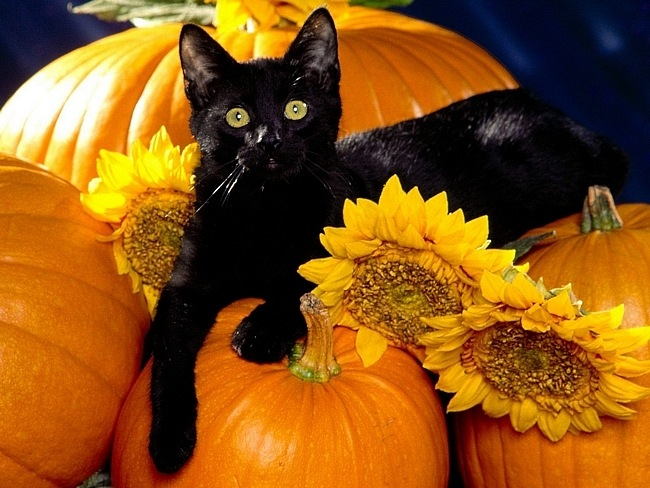 Halloween_Black Cat on Pumpkin and Sunflowers